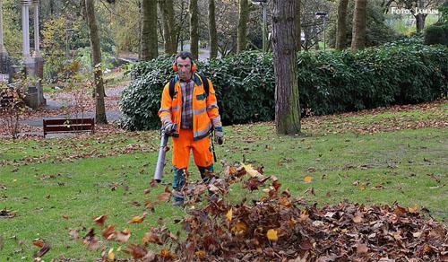 giardinaggio e manutenzione del verde
